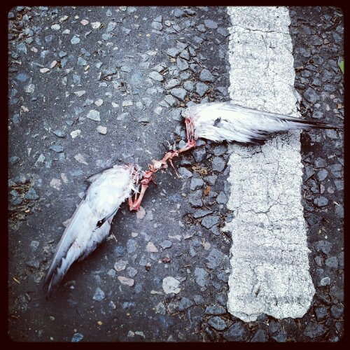 Travels: Fallen bird angels in London